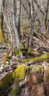 Parcelle-forestiere-sans-avenir - Haute-Savoie
